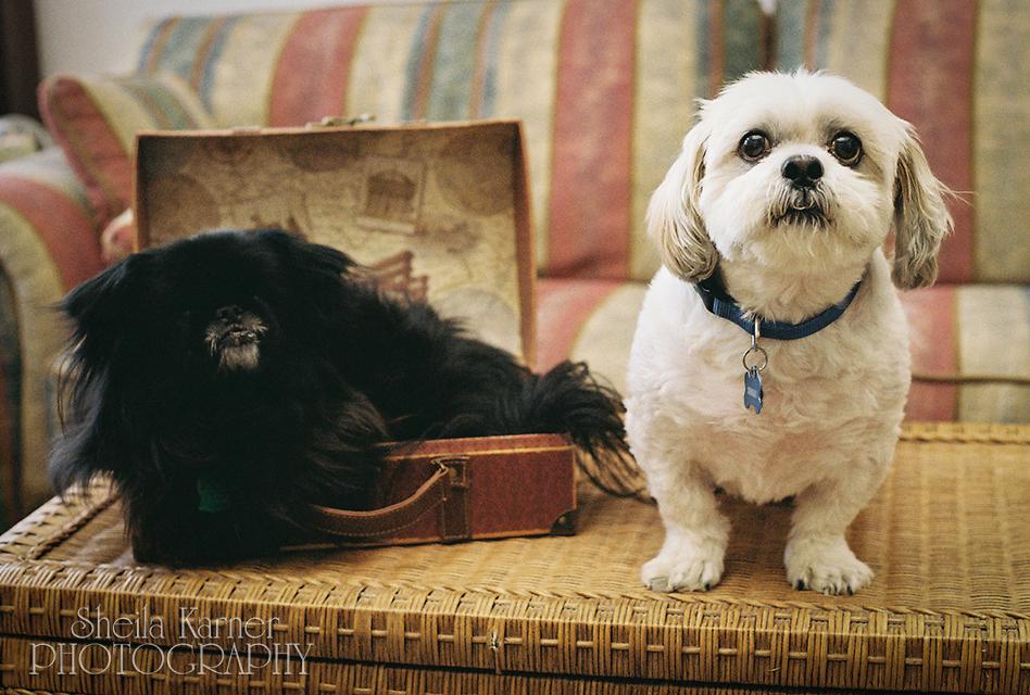 Denver Area Pet Photography