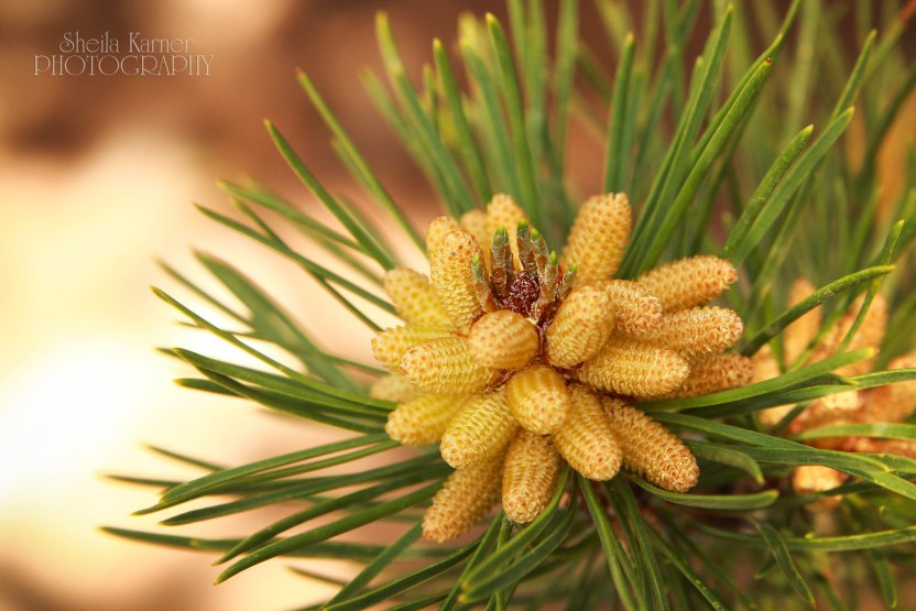 Pine | Golden Gate Canyon State Park