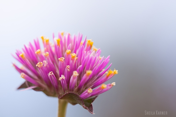 Nature | Sheila Karner Photography