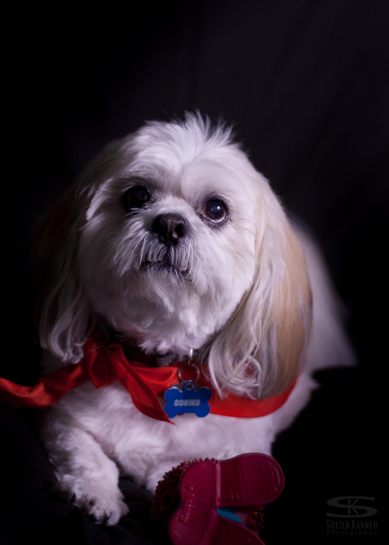 pet photography, dog
