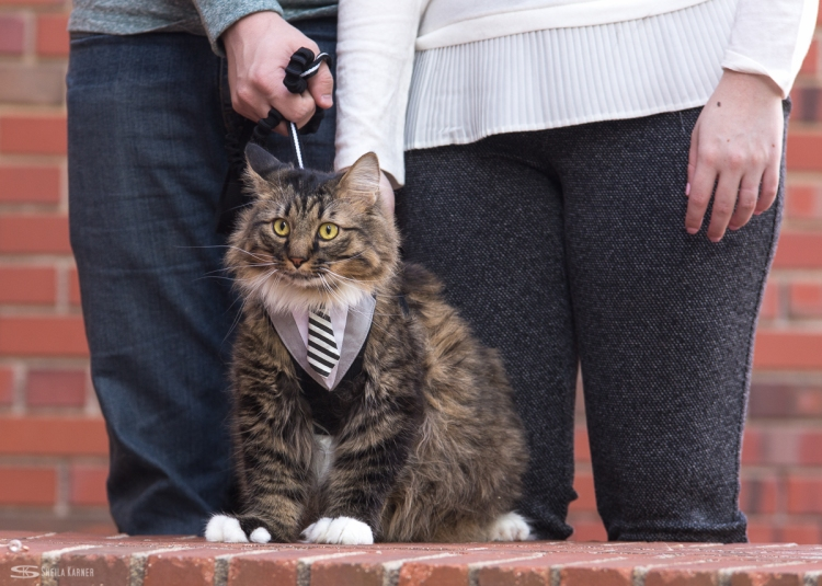 Engagement photos in Greeley at UNC - University of Northern Colorado - with their cat!
