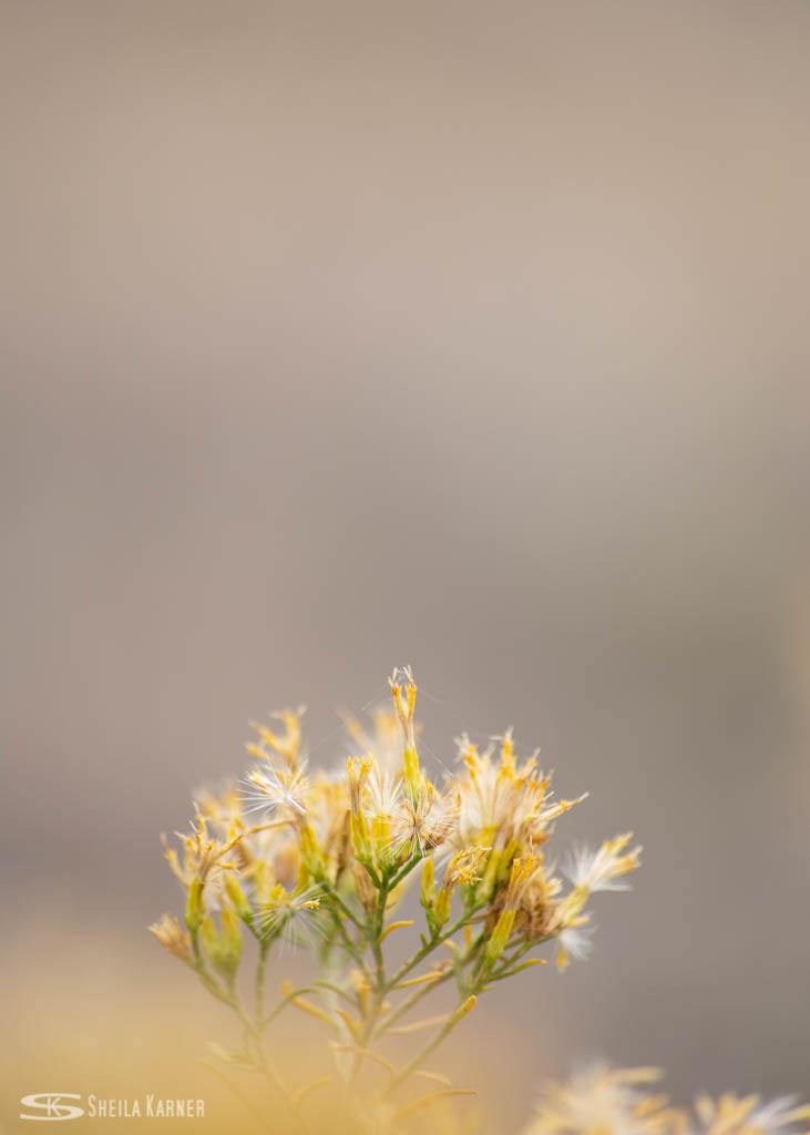 Colorado Fall - 2018 - wildflower